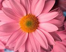 Ткань для букв подушек розовая